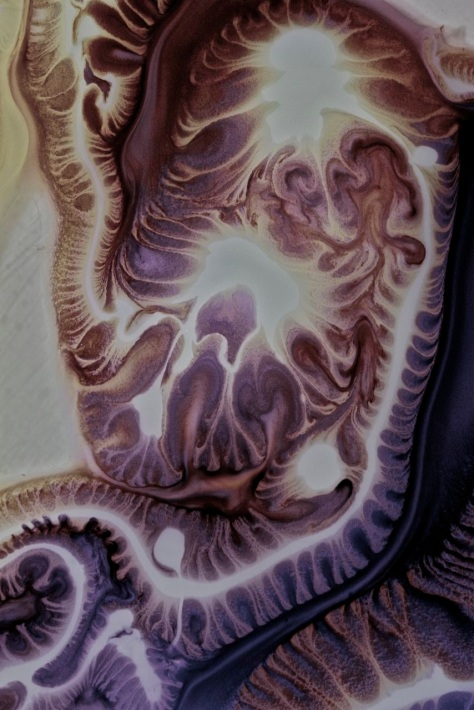 ernst-haeckel-revisited.jpg